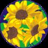 sunnydaysdesign