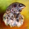 lifewithbirds