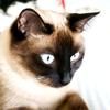 KittyMisty