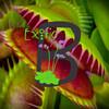 exoticbotanical
