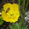 Wildflower7777