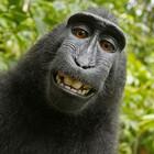 Makakus