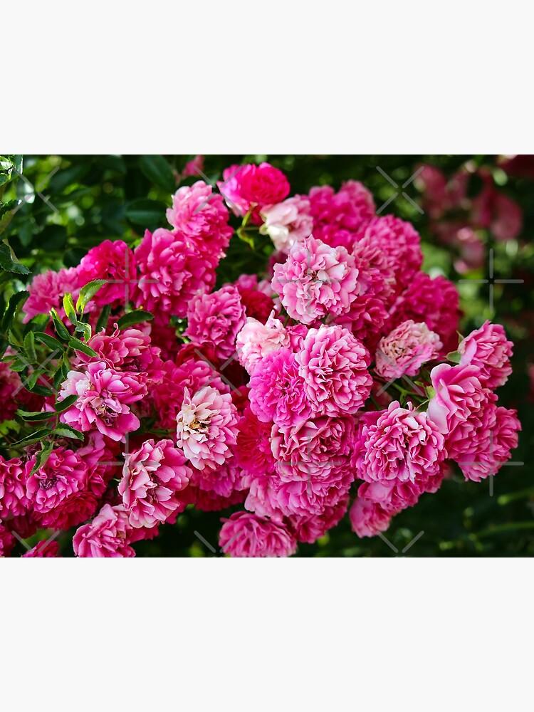 Rose bunch by debfaraday
