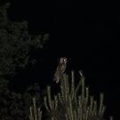 Owl in the Garden by Pamela Jayne Smith