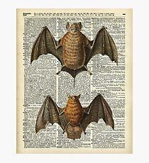 Bat Anatomy Illustration Over Vintage Encyclopedia Page Photographic Print