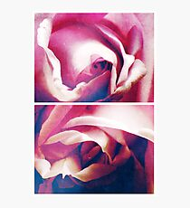 Spring - Roses - Blue Moon Photographic Print