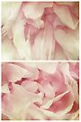 Spring - Roses - Palest of Pinks by Sybille Sterk
