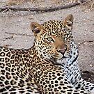 Leopard by Ingrid *