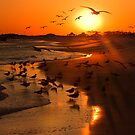 Sunset Birding by Kathy Cline