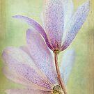 Windflowers by Beth Mason