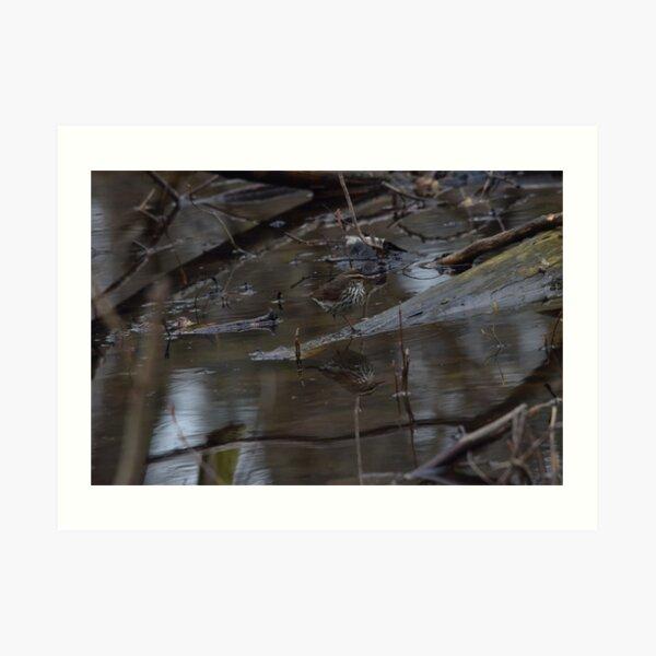 Northern Waterthrush Art Print