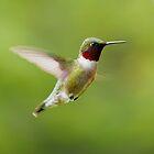 Hummingbird 1 by Molly  Kinsey