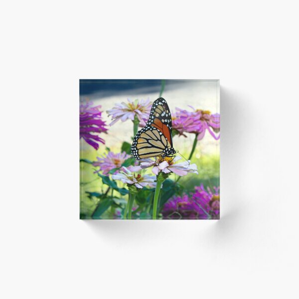 Monarch Butterfly Among Flowers Acrylic Block