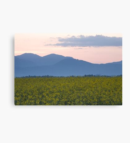 rapeseed field with Kamnik Alps in the background Canvas Print