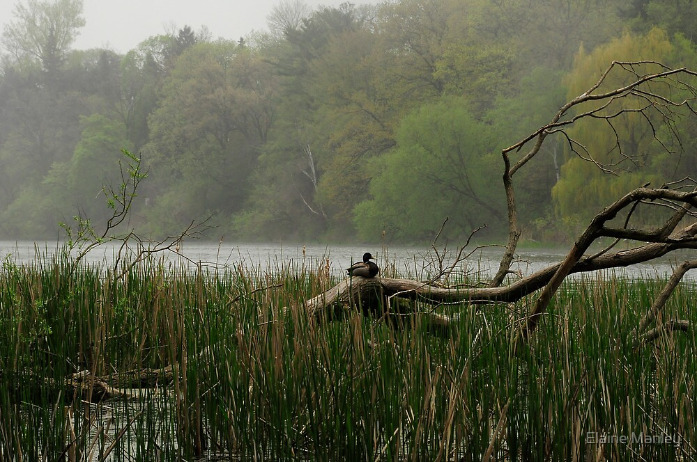 Alone on a Foggy Day  by Elaine  Manley