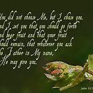 Set to bear fruit ~ John 15:16 by Robin Clifton