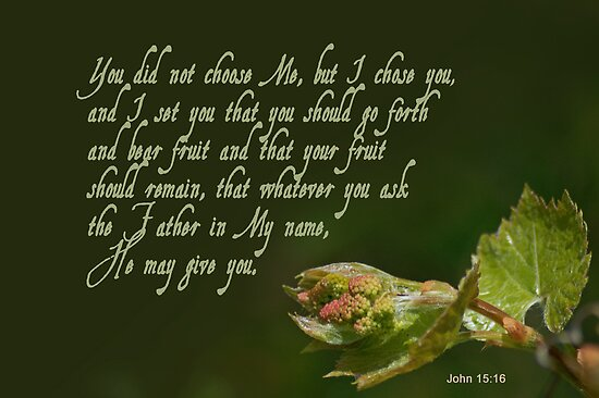 Set to bear fruit ~ John 15:16 by Robin Clifton