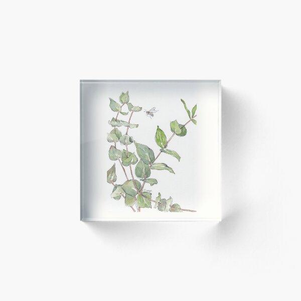 Gums and bees - Botanical illustration Acrylic Block