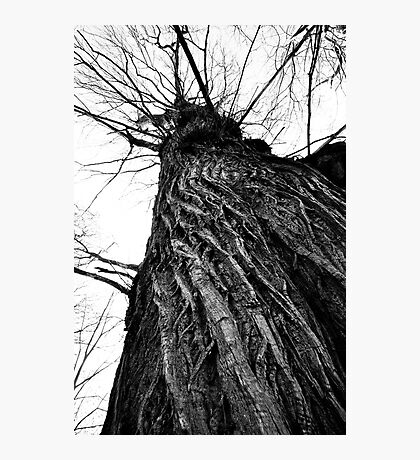 Sprawling Bark Photographic Print