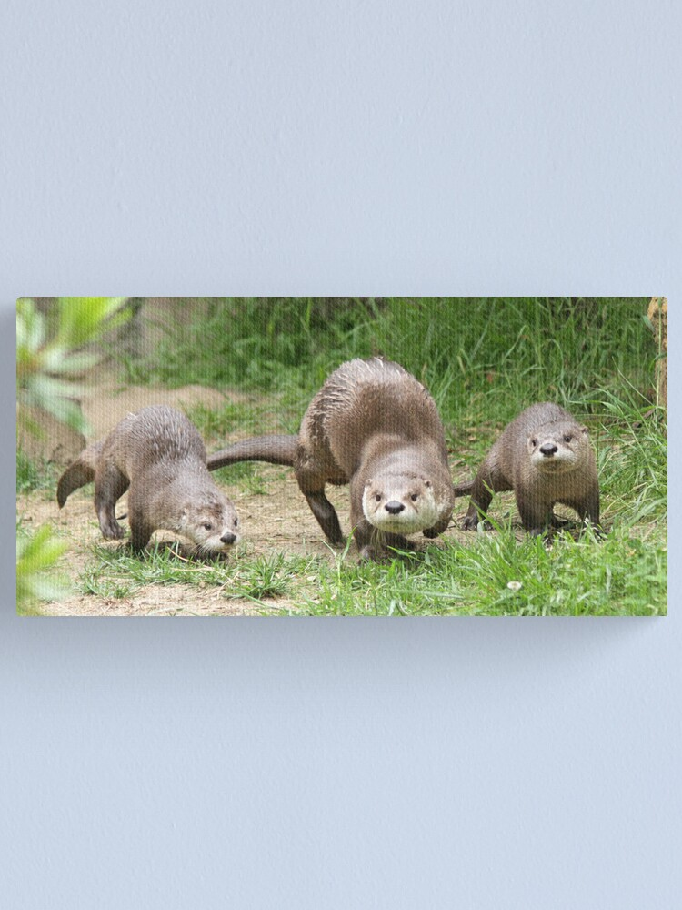Alternate view of Otters together Canvas Print