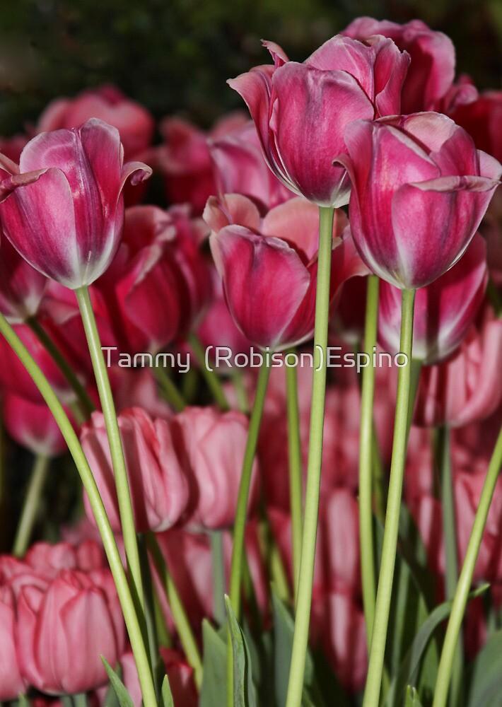 Stand Pretty by Tammy  (Robison)Espino