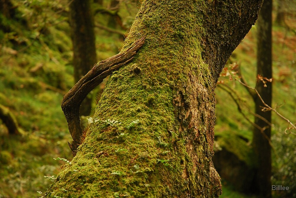 """CLAW""  Branch and tree. by Billlee"