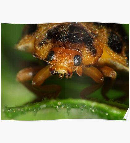 Macro of a Ladybeetle Poster