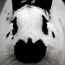 Black And White Bunny by Diego Re