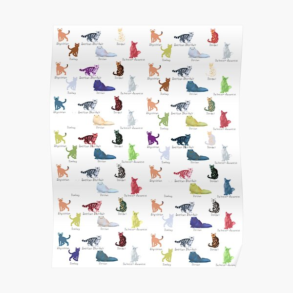 Colourful cat breeds Poster