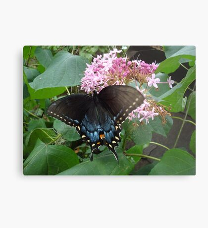 Black Eastern Swallowtail - Summer's End Metal Print