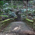 Rainforest walk by Adriano Carrideo