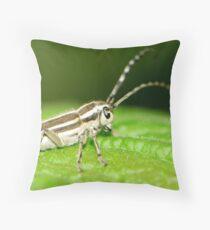 pigtail bug Throw Pillow