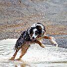 Water Dance by Robert  Mackert