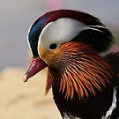 Mandarin Drake by Neil Bygrave (NATURELENS)