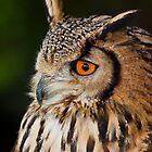 Eurasian Eagle-owl (Bubo bubo) by Gabor Pozsgai