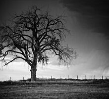 The Tree Of Life B&W by John  De Bord Photography