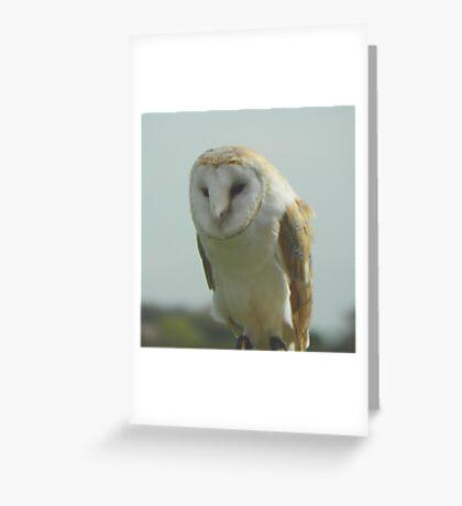 Barn Owl Taking It Easy Greeting Card