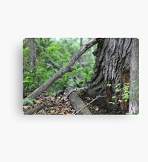 Branches At The Foot Of The Tree Canvas Print