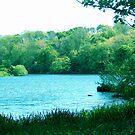 Springtime River Scene. by sweeny