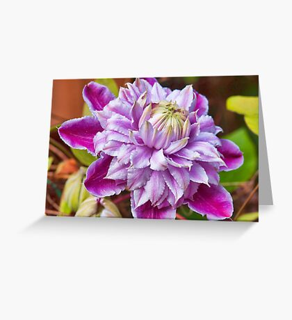 Clematis - Josephine Greeting Card