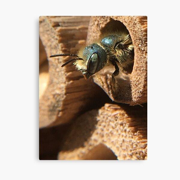 Mason Bee Canvas Print