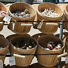 She actually DOES sell seashells on the seashore! by ellismorleyphto