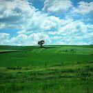 Summer Country in Iowa by Linda Miller Gesualdo