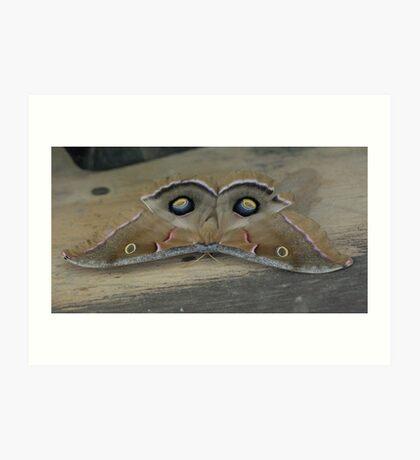 Owl Face Moth Art Print