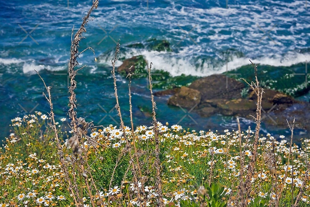 Daisy Coast  by Heather Friedman