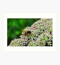 Bee Nice Art Print