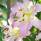 Summer Flowers Pink Lily Floral Lilies Basle Troutman by BasleeArtPrints
