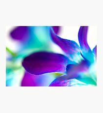 Abstract orchid Photographic Print