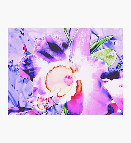 Orchid Art Collection  Photographic Print