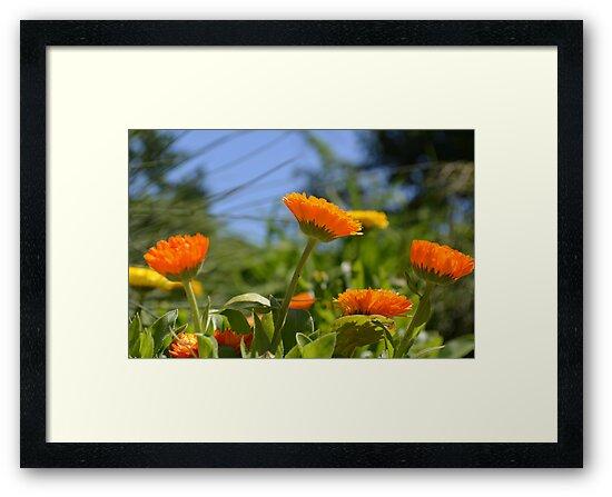 Cheerful Orange and Yellow Flowers by Paula Betz